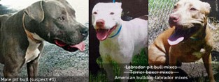 pit-bulls-kill-javon-dade-miami-dade-county-high-resolution-analysis-2