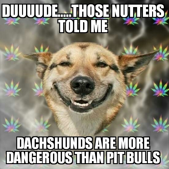 Stoner Dog dauchunds more dangerous